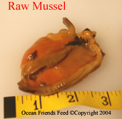 Mussel  (Mytilus edulis) Whole Meat IQF