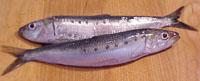 IQF - Pacific Sardine (Sardinops sagax)
